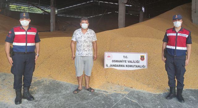 Çaldığı 52 ton mısırı satmaya çalışırken yakalandı