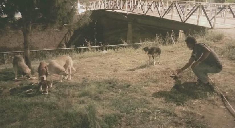 Düziçi Belediyesi sokak hayvanlarını aç bırakmıyor